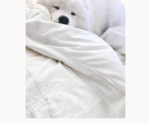 cozy, dog, and Samoyed image