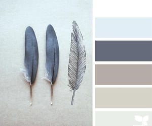colors, muted, and feathers image