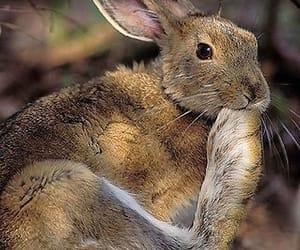 rabbit toes image