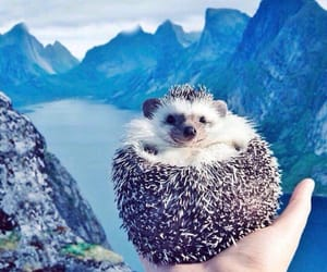 hedgehog, animal, and beautiful image