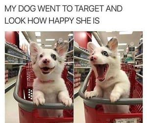 dog, happy, and meme image