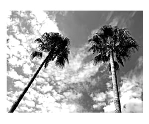 black, white, and palms image