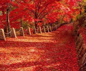 autumn, fall, and red image