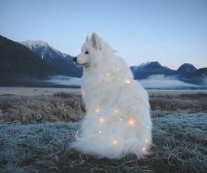 dog, animal, and light image