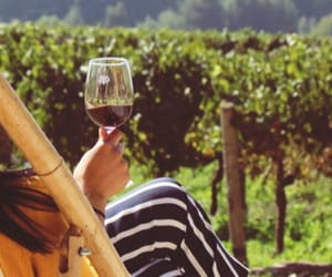 chile, travel, and wine image