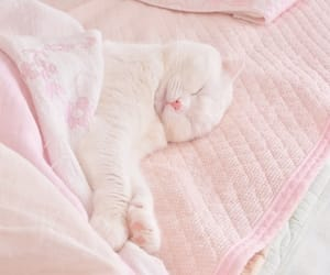 cat, pink, and pastel image