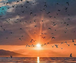colors, nature, and seagulls image