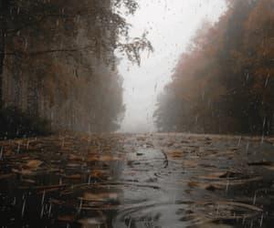 autumn, rainy day, and fog image