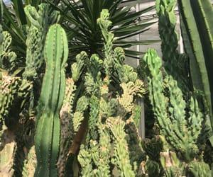 aesthetics, america, and botanic garden image