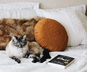 bedroom, cat, and sheets image