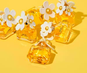 aesthetic, collection, and daisies image