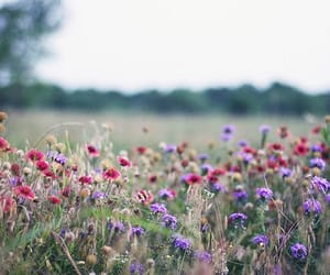 background, flower background, and flower field background image