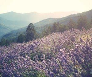 flowers, nature, and lavender image