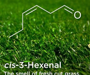 chemical, education, and grass image
