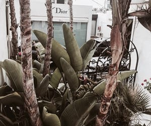 dior, plants, and green image