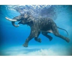 animals, elephants, and wild image