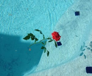 rose, blue, and aesthetic image