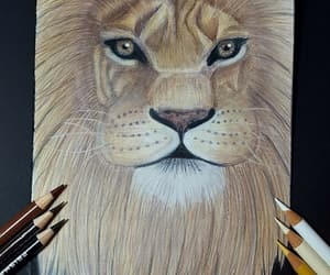 bunt, drawing, and lion image