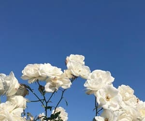 flowers, sky, and white image