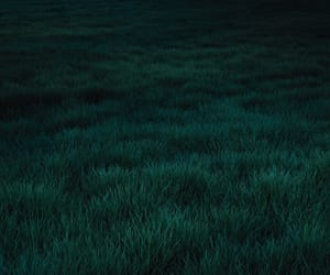grass and green image