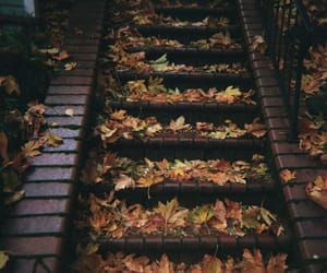 autumn, fallen leaves, and leaves image