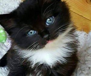 kitty, cat, and kitten image