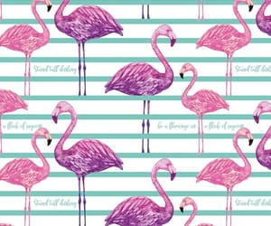 background, birds, and flamingo image