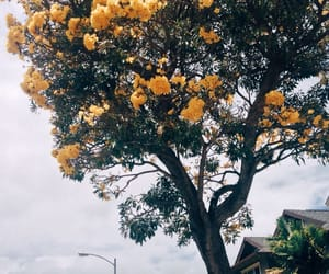 tree, flowers, and nature image