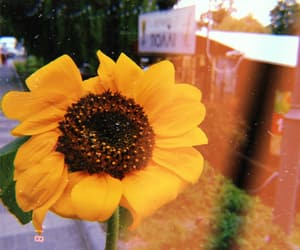 flower, inspiration, and nature image