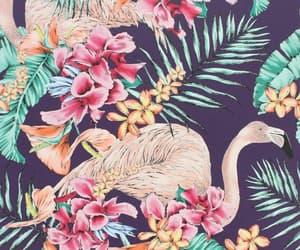background, flamingo, and paradise image