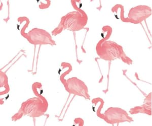 pink, flamingo, and cute image