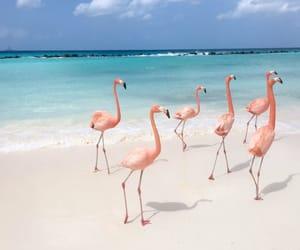 animals, paradise, and beach image