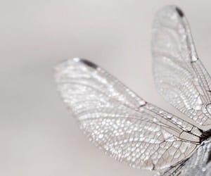 fairy, silver, and wings image