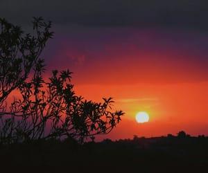 nature photography, orange, and photography image