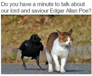 funny, cat, and edgar allan poe image