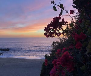 alternative, beach, and floral image
