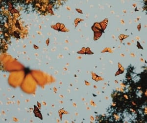 butterfly, indie, and nature image