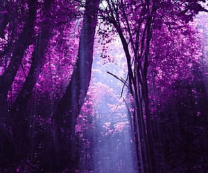 fairytale, purple, and wood image
