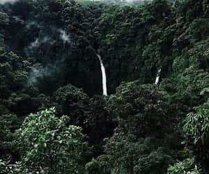 green, jungle, and plant image