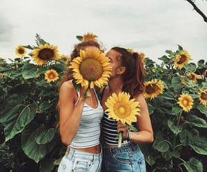 Sunflowers is my favorite flowers