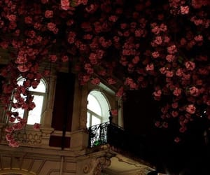 flowers, architecture, and dark image