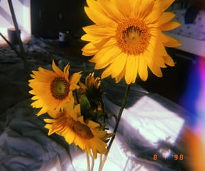floral, pretty, and sunflower image