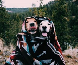 Animais, cachorros, and animal image