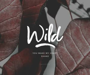 wallpaper and wild image