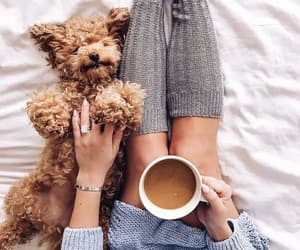 coffee, dog, and cozy image