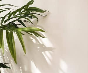 aesthetic and plant image