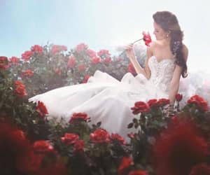 among the roses. image