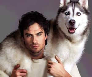 dog, ian somerhalder, and Hot image