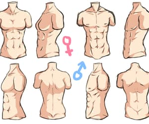 drawing, female body, and male body image