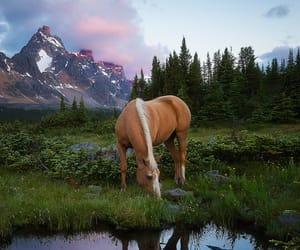 lake, mountain, and nature image